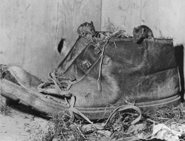 Der Schuh des Apfelmäuschens